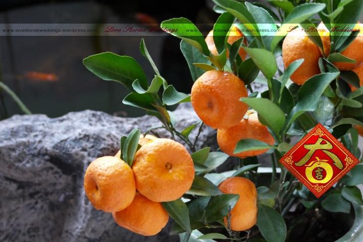 Kamquats