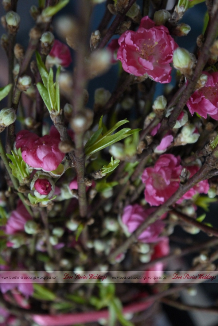 Peach Blossom Bundle