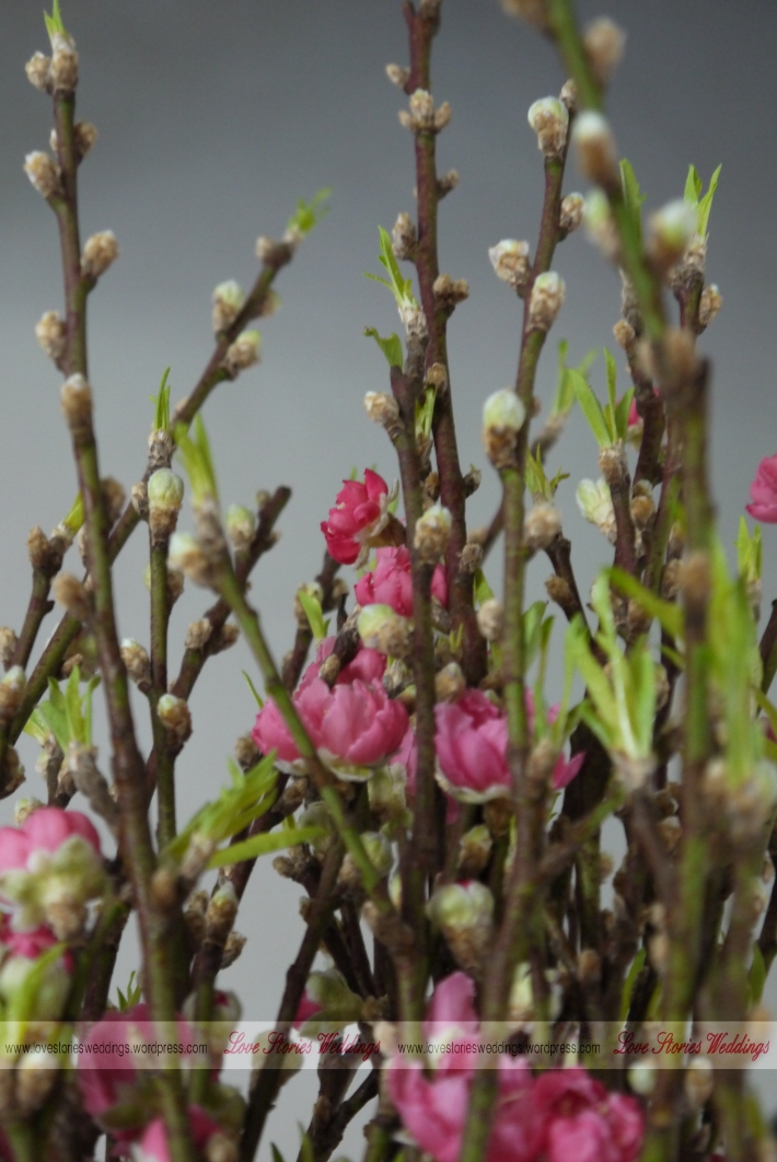 Budding Peach Blossom