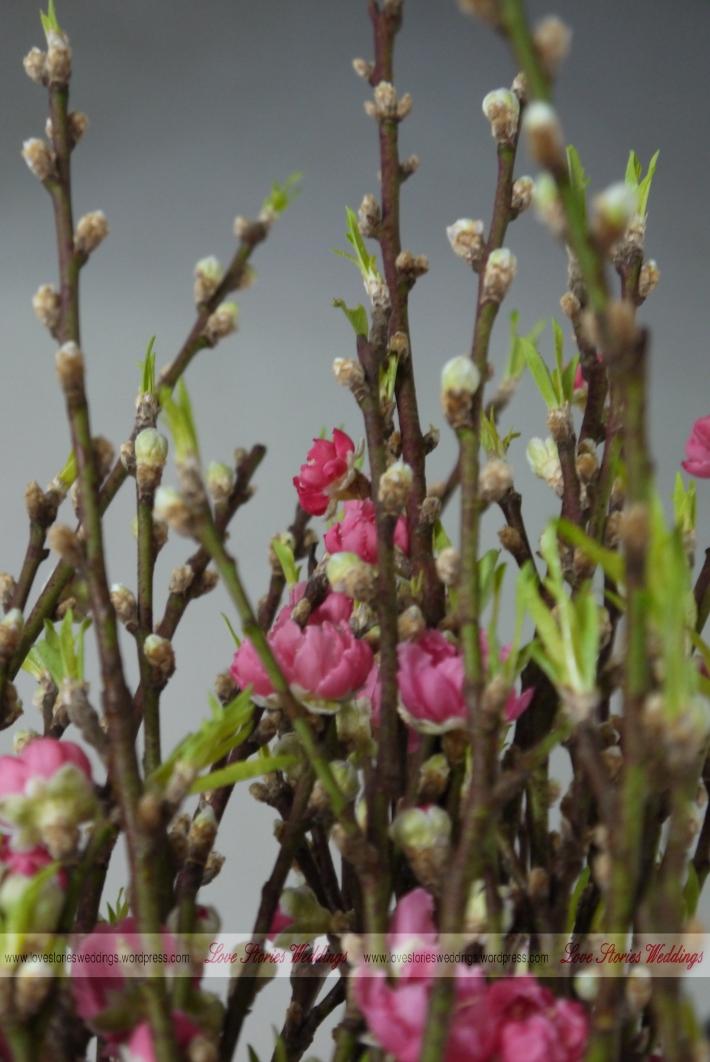 Budding Peach Blossom