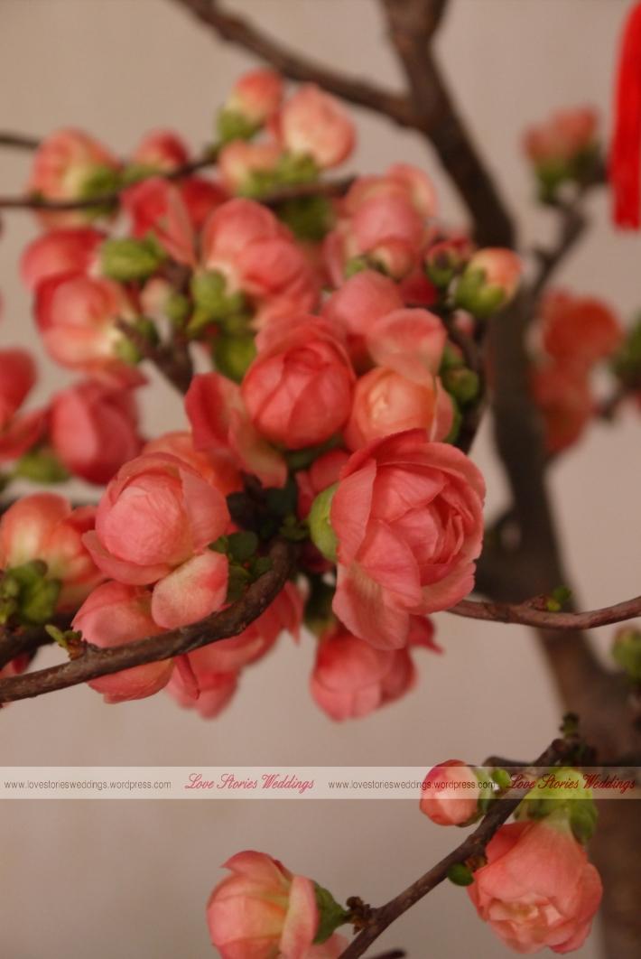 Bloomed Begonia Rose (Hai Tang)