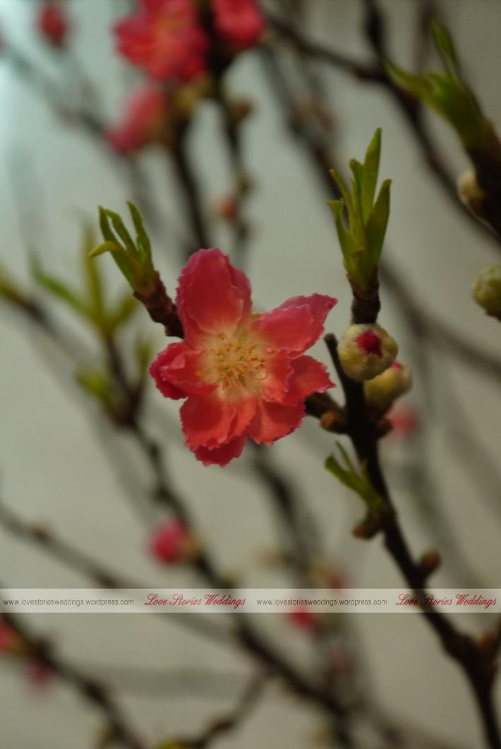 Closeup Peach Blossom
