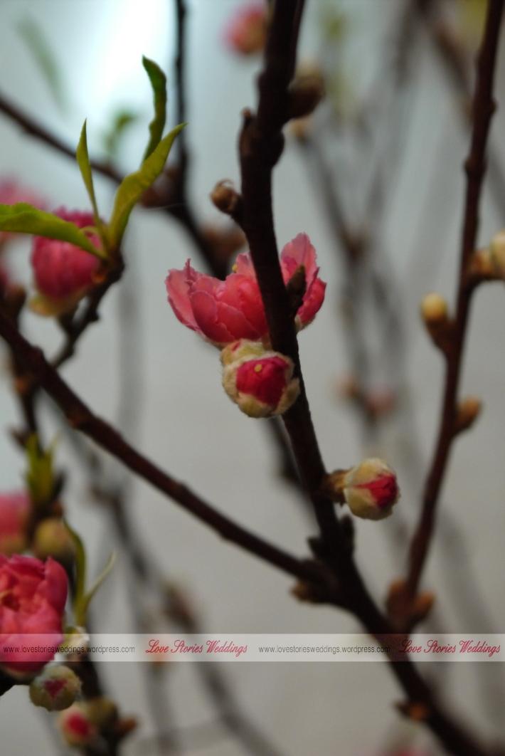 Peach Blossom Bud